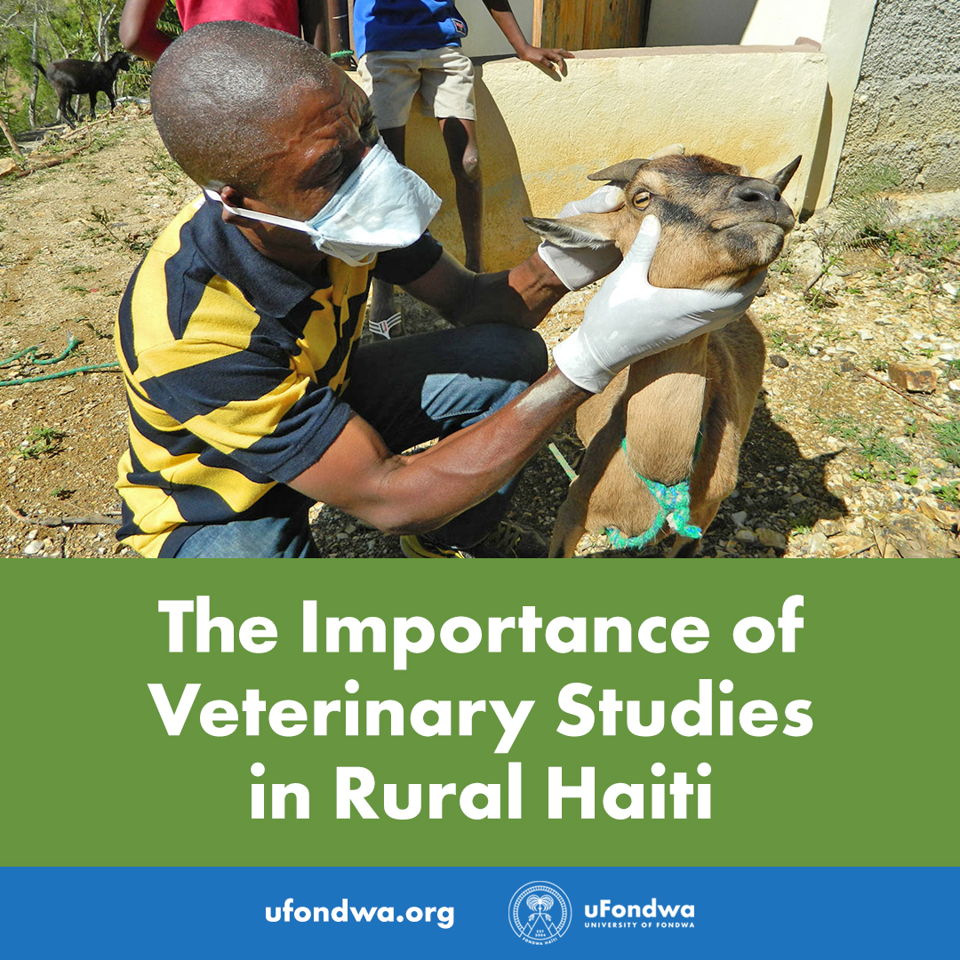 The Importance of Veterinary Studies in Rural Haiti